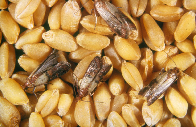Отрава для пищевой моли